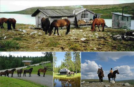 pferde-reithof-201106120030104.jpg