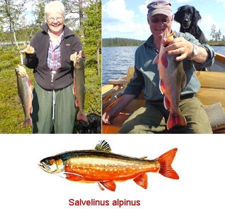 saibling-angeln-201102252121424.jpg