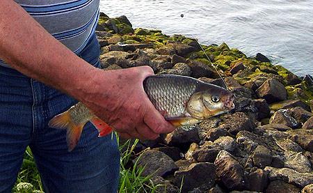 weissfisch-angeln-fruehling-201203240152435.jpg