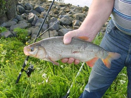 weissfisch-fangen-201105062308386.jpg