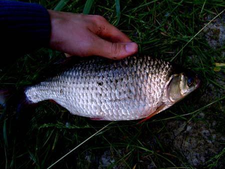 weissfisch-in-dunkelheit-201107200135564.jpg